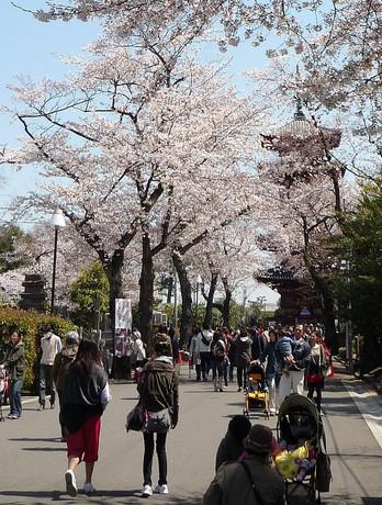 Sakuragojyunotou